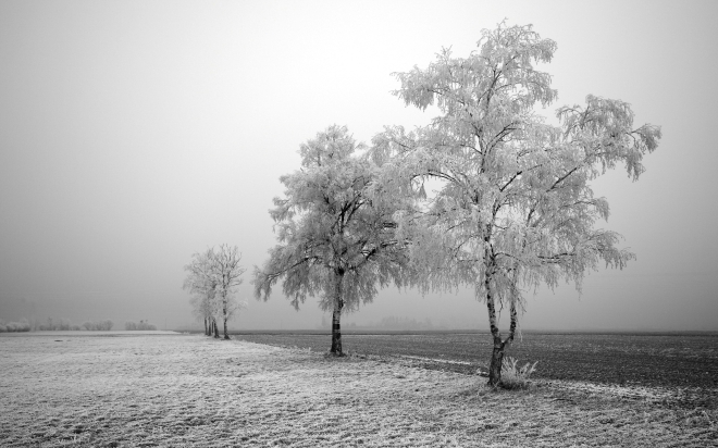 gelo-campo-congelato-imc